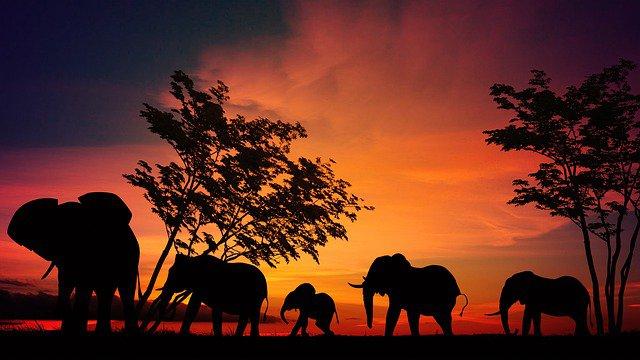 Elephant Africa Trip