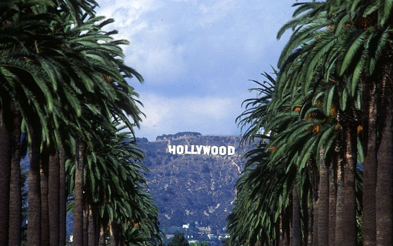 Hollywood Sign Through the Palm Trees